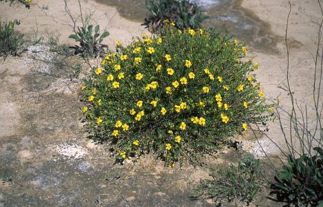 planta peligro extincion