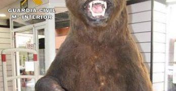 oso-pardo-naturalizado-dos