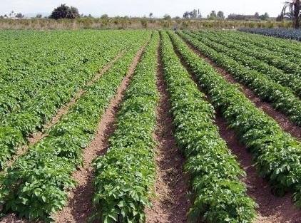 El Gobierno regional marca su estrategia en materia de agricultura, medio ambiente y desarrollo rural con un Plan de Regadíos sostenible