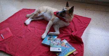 La Paz, Diocesano y Ave María incorporan el programa de lectura con perros
