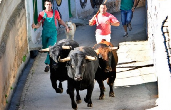 Alcaldes del PP exigen la permanencia de encierros taurinos en municipios de la sierra albaceteña