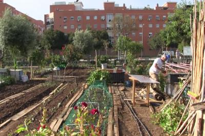 Pleno  Sí a ampliar los huertos urbanos en la capital aunque sin apoyo de PP y Ciudadanos