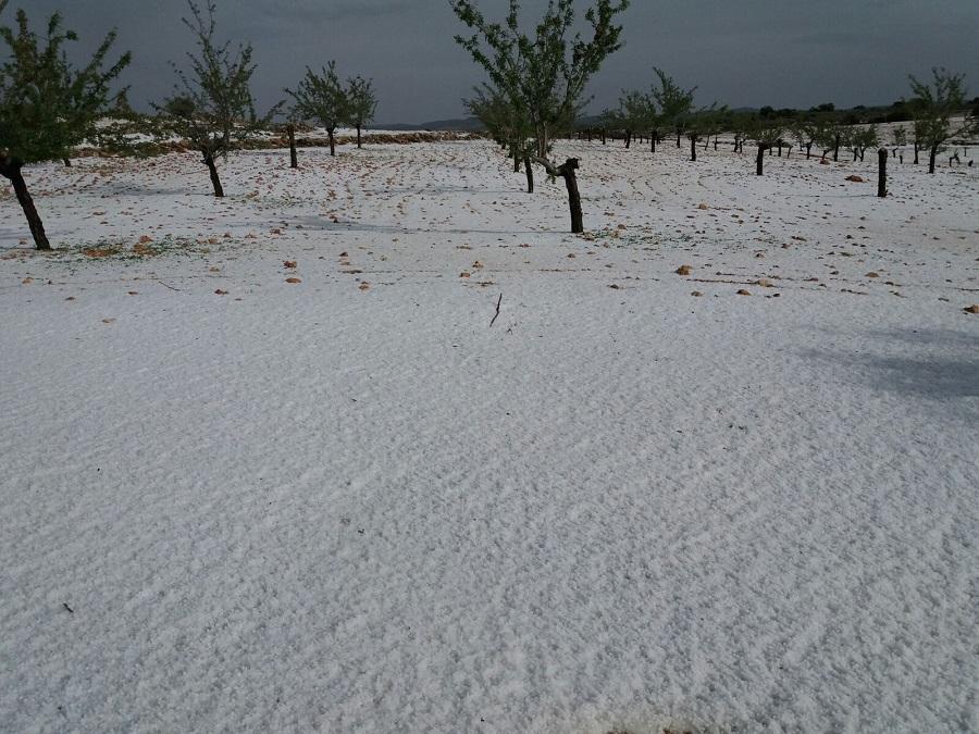 El pedrisco deja graves daños en los cultivos de San Pedro