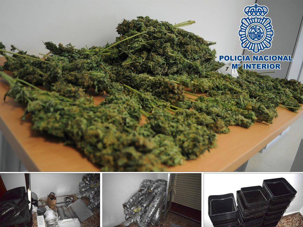 Cinco detenidos en Hellín tras desmantelar una plantación de marihuana preparada para la venta