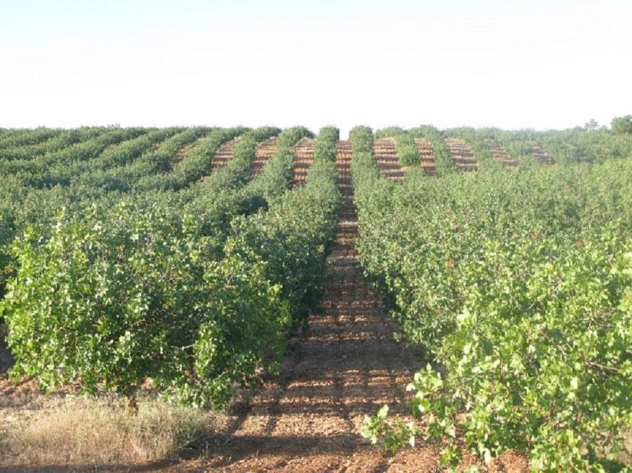 Agricultura Biodinámica: equilibrio con la naturaleza y las formas ancestrales de producción