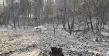 Desempleados de la zona trabajan en la restauración del área afectada por el incendio de Yeste