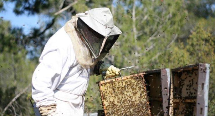 La sequía amenaza la supervivencia de las abejas en la provincia